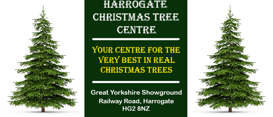Buy a real Christmas Tree in Harrogate